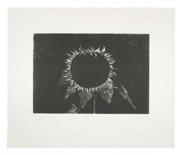Sunflower Head by Ken Currie limited edition etching