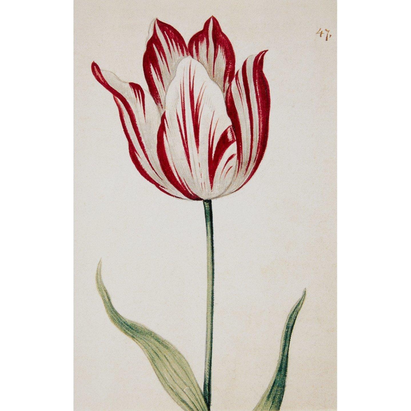 Tulips notecard set (10 cards)