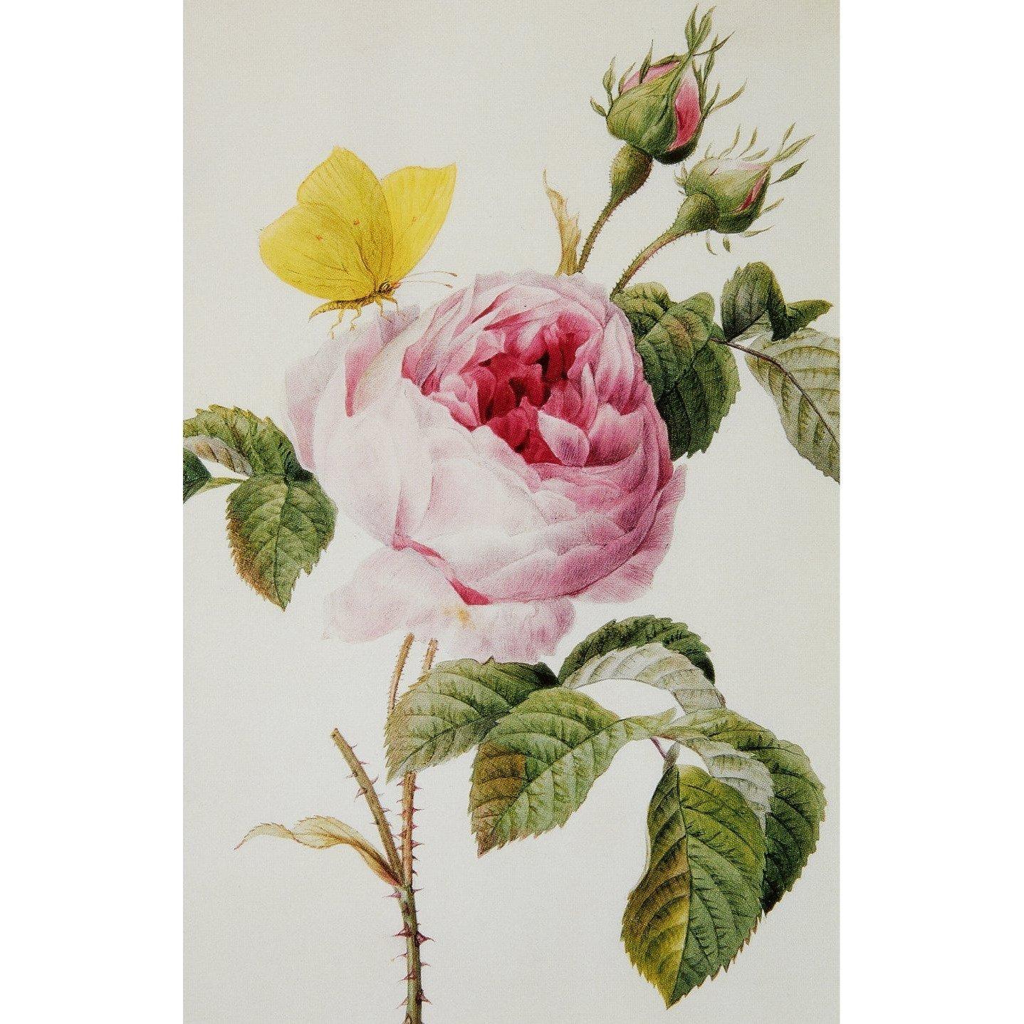 Roses notecard set (10 cards)
