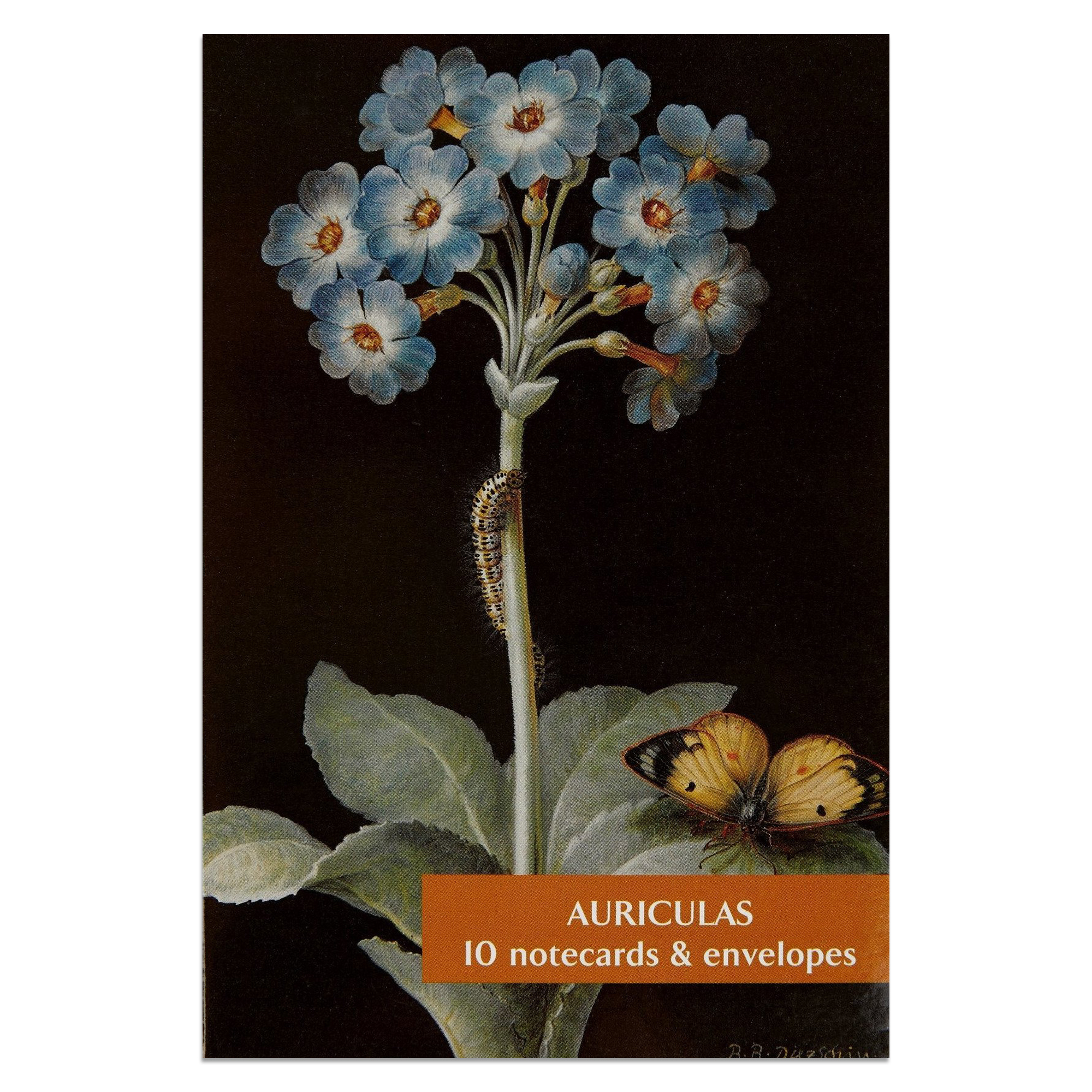 Auriculas notecard set (10 cards)