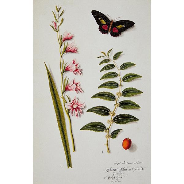 Butterflies notecard set (10 cards)