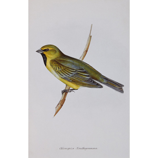 Darwin's Finches notecard set (10 cards)