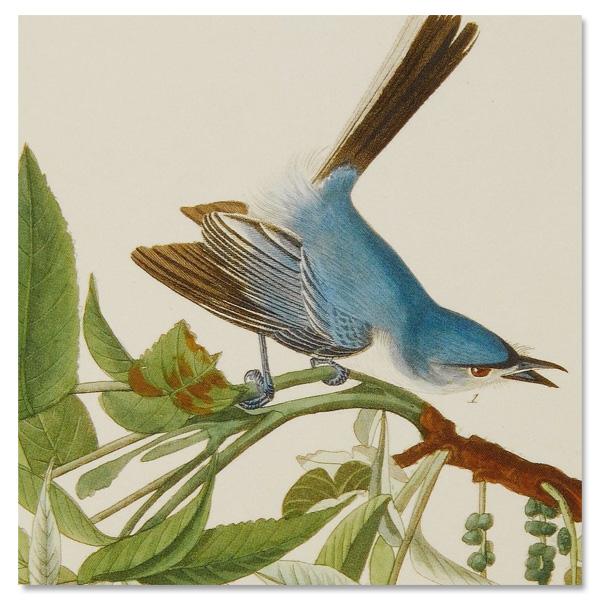 Audubon birds square notecard set (10 cards)