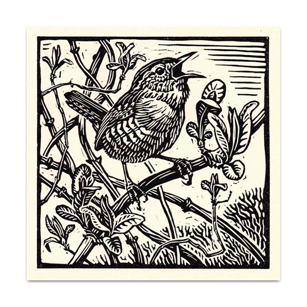 Wren greeting card