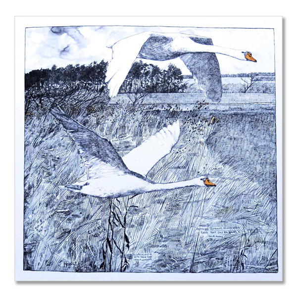Not so mute swans greeting card by Hannah Longmuir