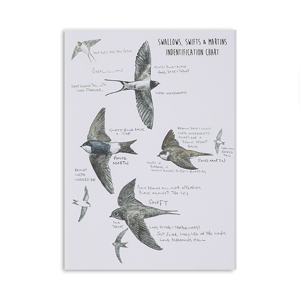 Swift and swallow chart greeting card by Hannah Longmuir