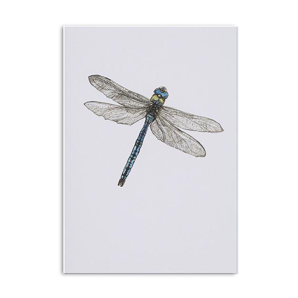 Dragonfly greeting card Hannah Longmuir