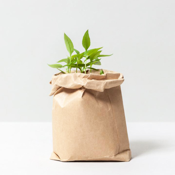 Cultivate and eat lemon scented basil