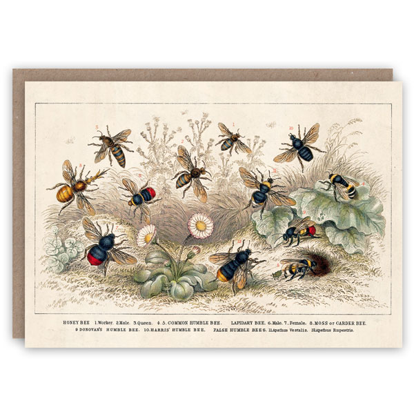 Bees pattern book greeting card