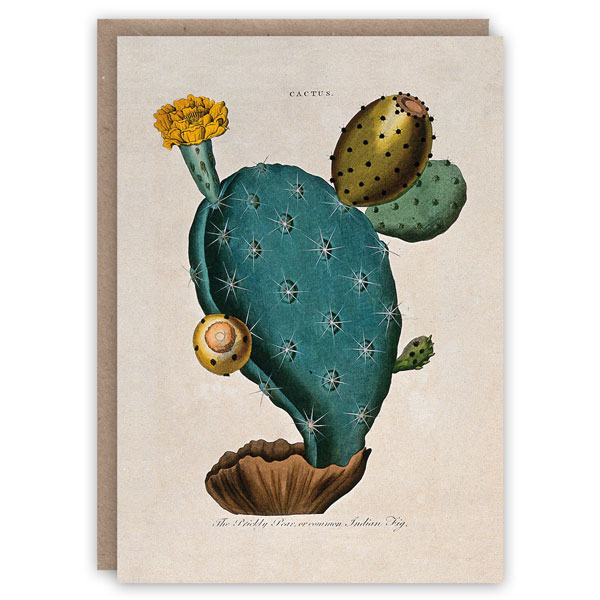Prickly pear pattern book greeting card