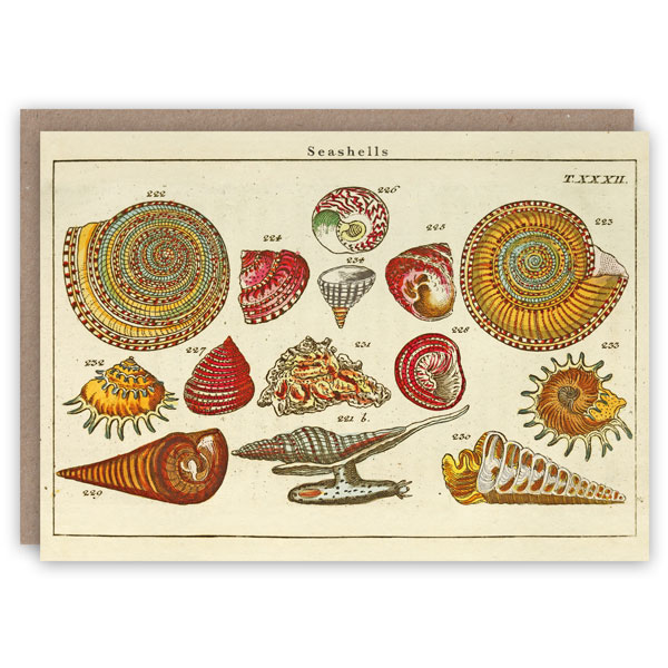 Seashells pattern book greeting card