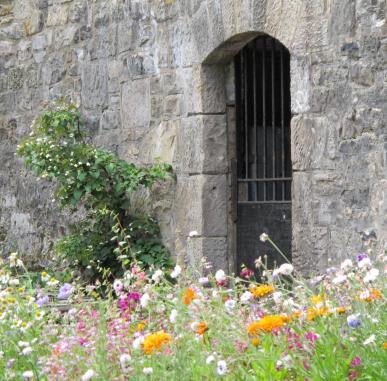 Hidden Gardens of the Royal Mile