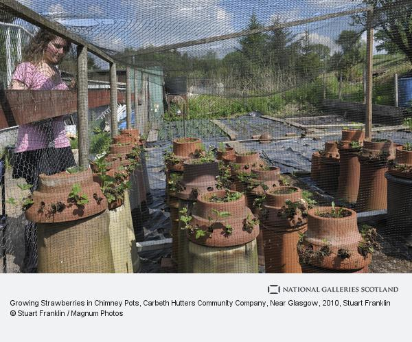Stuart Franklin, Growing Strawberries in Chimney Pots, Carbeth Hutters Community Company, Near Glasgow