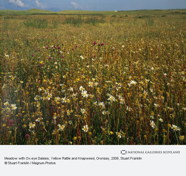 Stuart Franklin, Meadow with Ox-eye Daisies, Yellow Rattle and Knapweed, Oronsay