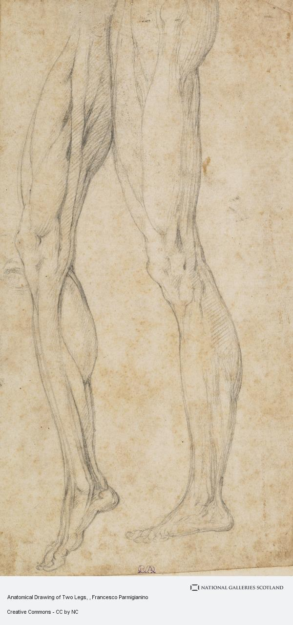 Francesco Parmigianino, Anatomical Drawing of Two Legs