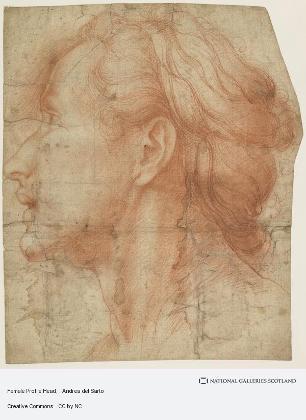 Andrea del Sarto, Female Profile Head