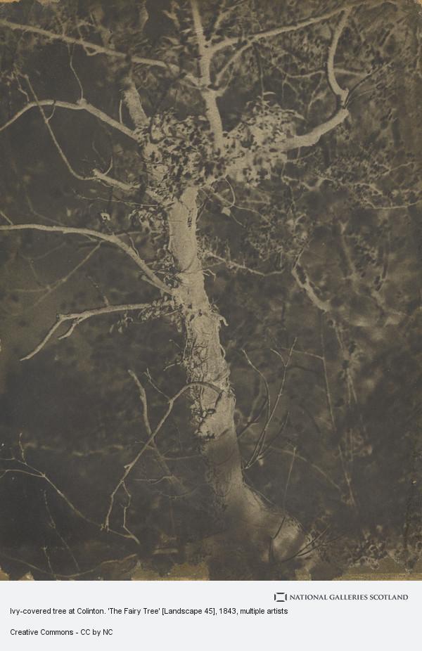 David Octavius Hill, Ivy-covered tree at Colinton. 'The Fairy Tree' [Landscape 45]