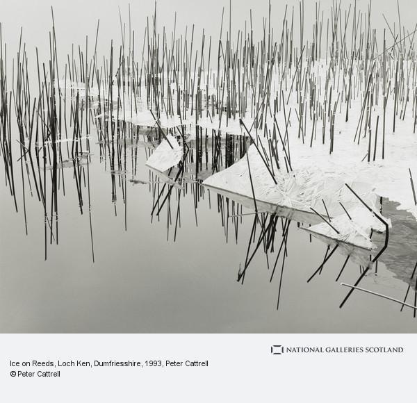 Peter Cattrell, Ice on Reeds, Loch Ken, Dumfriesshire