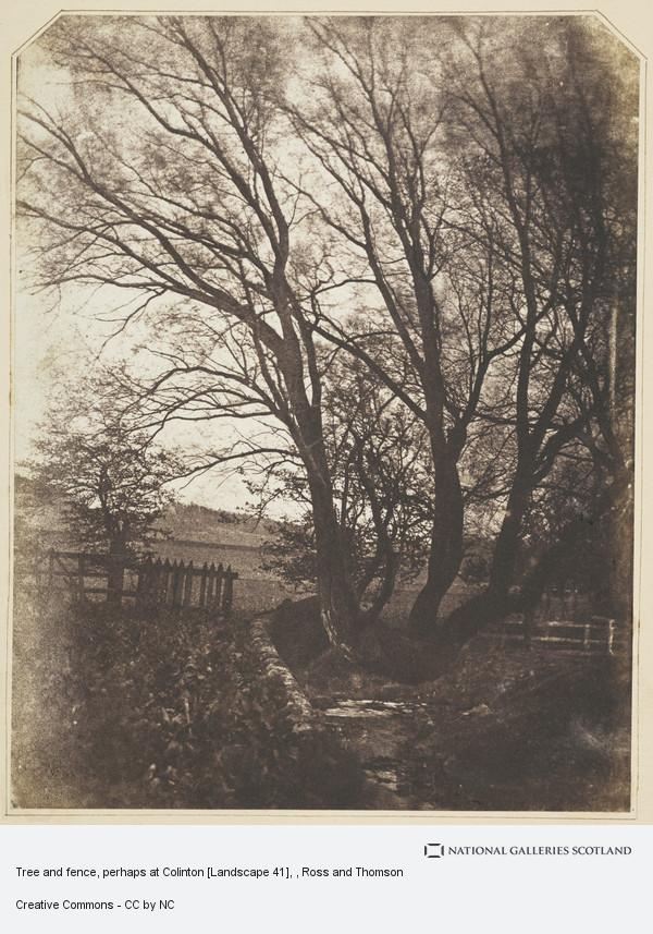 Ross and Thomson, Tree and fence, perhaps at Colinton [Landscape 41]