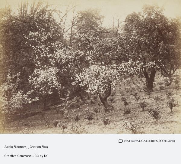 Charles Reid, Apple Blossom