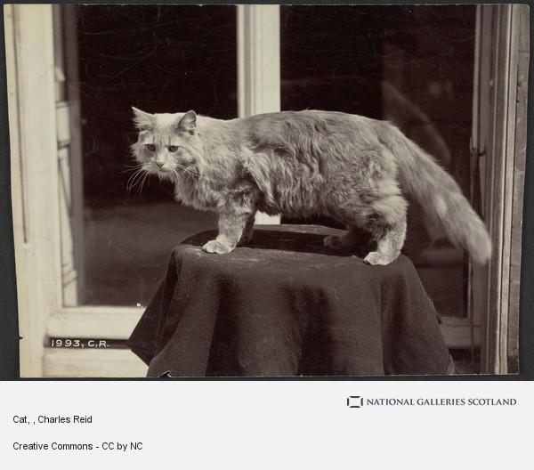 Charles Reid, Cat