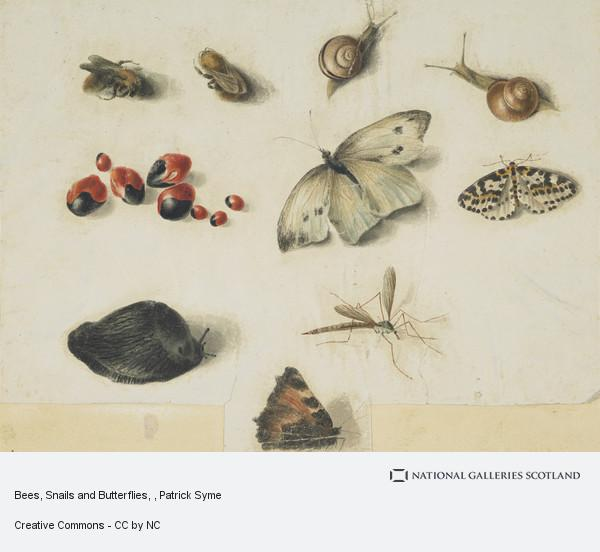 Patrick Syme, Bees, Snails and Butterflies