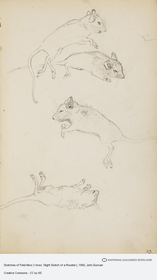 John Duncan, Sketches of Field Mice (Verso: Slight Sketch of a Rooster)