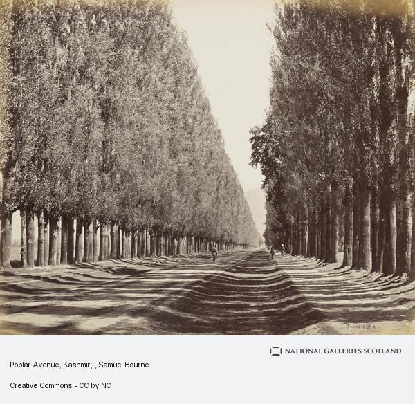 Samuel Bourne, Poplar Avenue, Kashmir