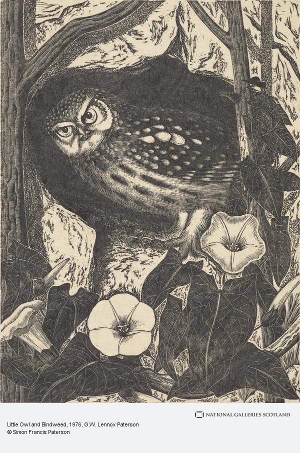 G.W. Lennox Paterson, Little Owl and Bindweed