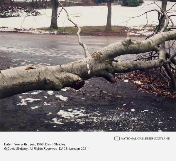 David Shrigley, Fallen Tree with Eyes