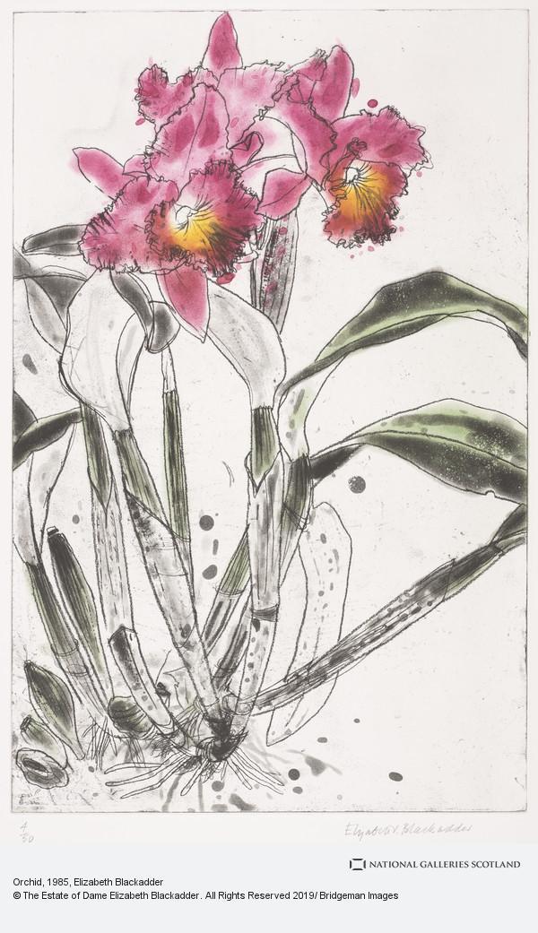 Elizabeth Blackadder, Orchid