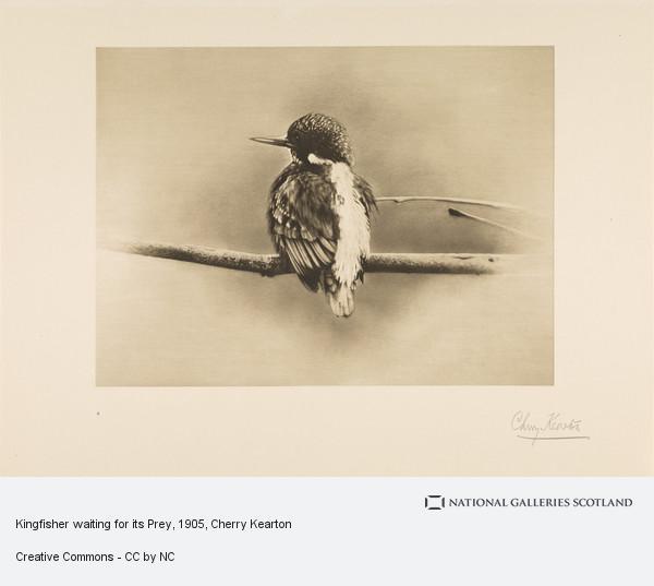 Cherry Kearton, Kingfisher waiting for its Prey
