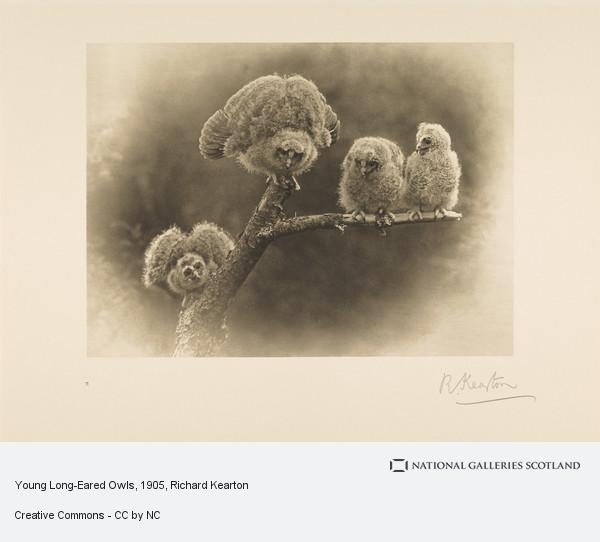 Richard Kearton, Young Long-Eared Owls