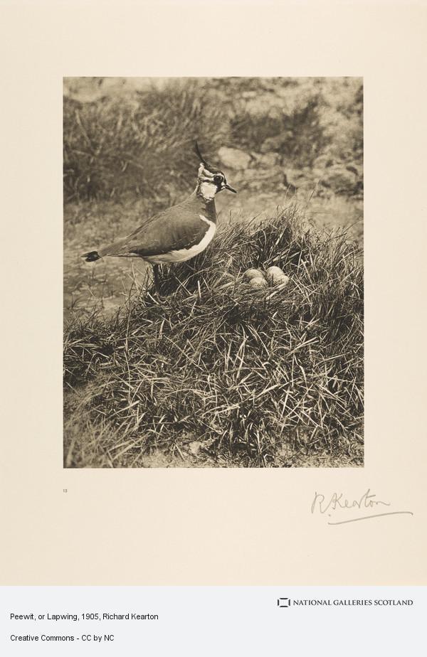 Richard Kearton, Peewit, or Lapwing