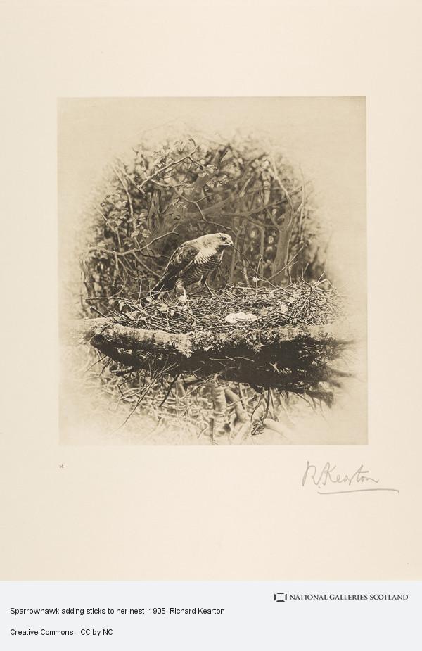 Richard Kearton, Sparrowhawk adding sticks to her nest