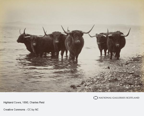 Charles Reid, Highland Cows