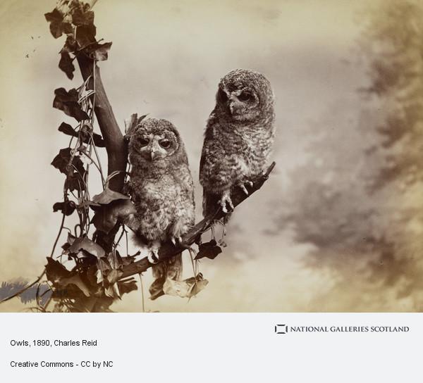 Charles Reid, Owls