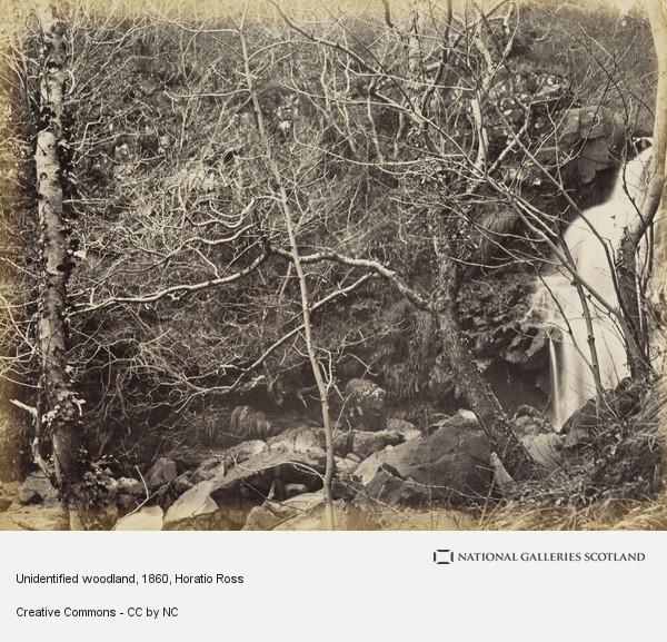 Horatio Ross, [Woodland Scene]