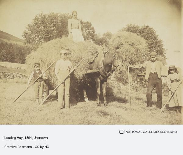 Unknown, Leading Hay