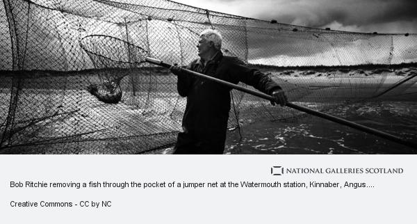 Colin McPherson, Bob Ritchie removing a fish through the pocket of a jumper net at the Watermouth station, Kinnaber, Angus. The nets are fished twice a day, on... (2000)