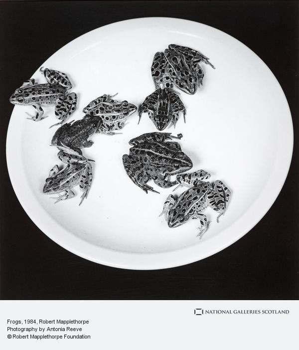 Robert Mapplethorpe, Frogs (1984)