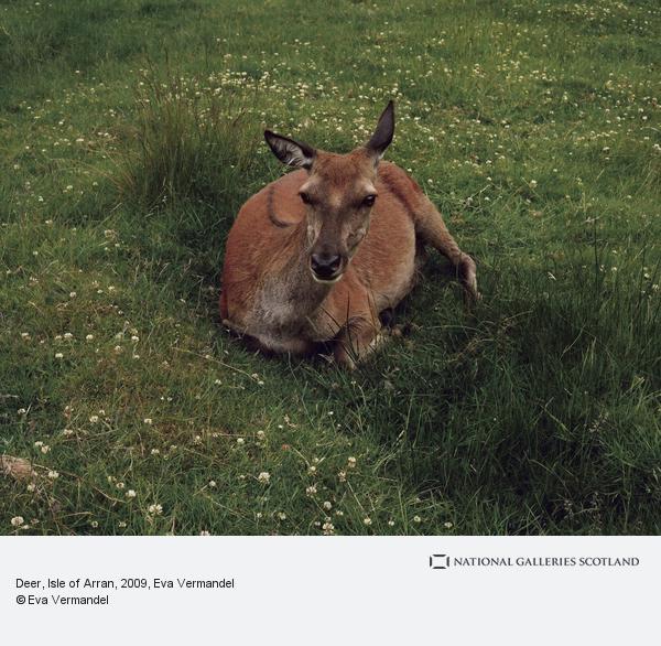 Eva Vermandel, Deer, Isle of Arran (June 2009)