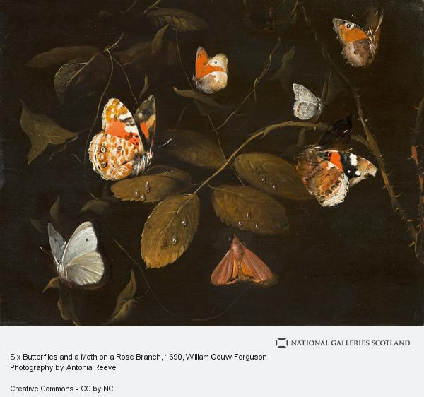William Gouw Ferguson, Six Butterflies and a Moth on a Rose Branch (About 1690)