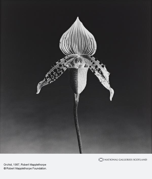 Robert Mapplethorpe, Orchid