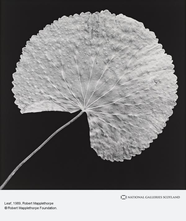 Robert Mapplethorpe, Leaf (1989)