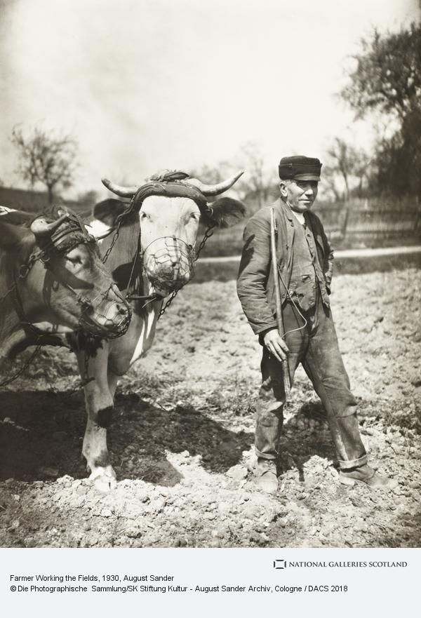August Sander, Farmer Working the Fields, about 1930 (about 1930)