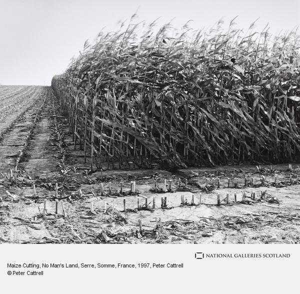Peter Cattrell, Maize Cutting, No Man's Land, Serre, Somme, France