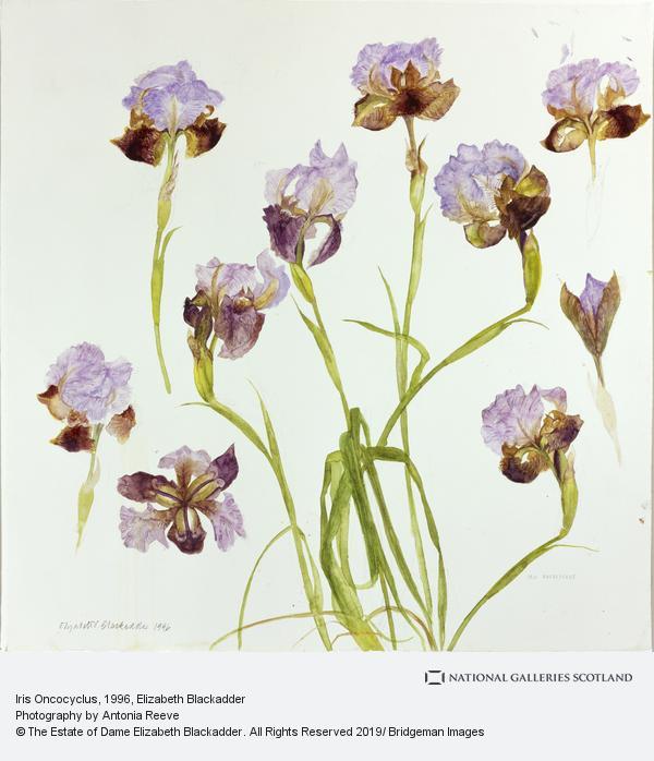 Elizabeth Blackadder, Iris Oncocylus (1996)
