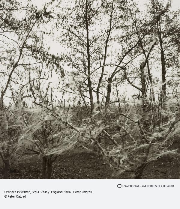 Peter Cattrell, Orchard in Winter, Stour Valley, England