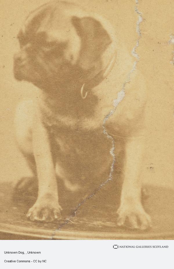 Unknown, Unknown Dog